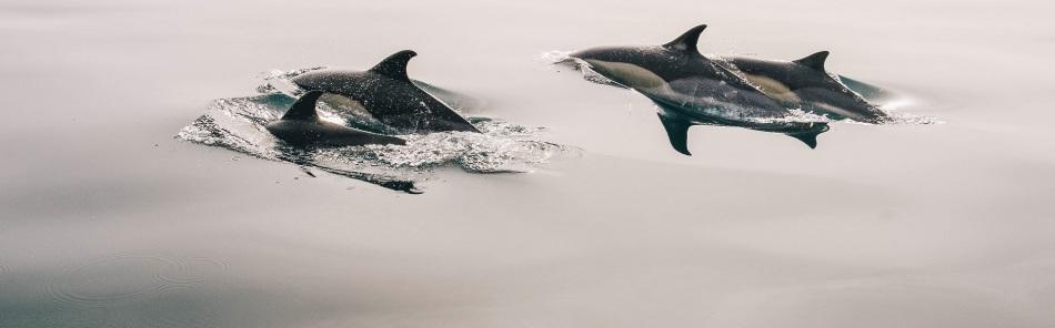 dolphins-glassy_1920x600